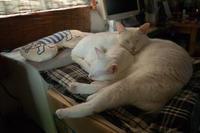 猫枕 - ちーの助が行く