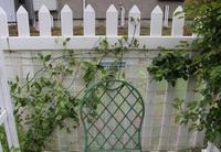 お庭のクレマチスに大爆笑! - ペコリの庭 *