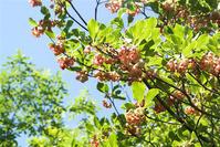 水芭蕉の森にて - オバサンが行く ヒマラヤの青いけしの旅/改め   時々蔵王の花たち