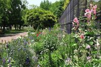 公園の花壇と木蔭を散歩 - お散歩写真     O-edo line