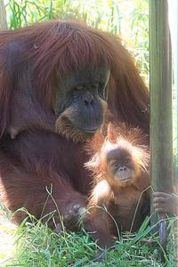 ただ今 赤ちゃんの名前を募集中 - 動物園放浪記