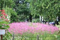 「草木が繁る」このとき・・・! - 一場の写真 / 足立区リフォーム館・頑張る会社ブログ