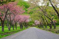 春色 - 北国の四季