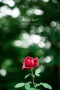 Rose fes* - ココロハレ*