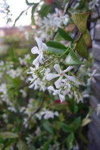 **初夏の花へ** - 毎日てくてくまりちゃん