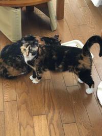 行列 - 愛犬家の猫日記