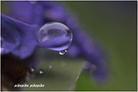 雨粒 - 今が一番
