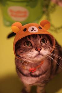 リラックマにゃ! - 愛しき猫にゃん♪