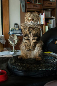 猫枕 - 2 - ちーの助が行く