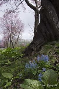 足元にも春 - ekkoの --- four seasons --- 北海道