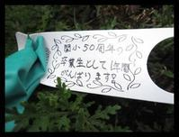 関小学校夏椿 - ひだまり●●●陽のあたる場所みつけました