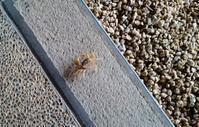 蟹さんと一緒にお見送り - 金沢犀川温泉 川端の湯宿「滝亭」BLOG