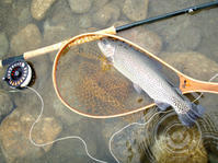 ちょっと雨が欲しい・・「会津・阿賀川」 - Nature World & Flyfishing
