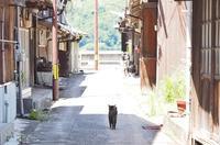 (7)御手洗のネコ - 静かに過ごす部屋
