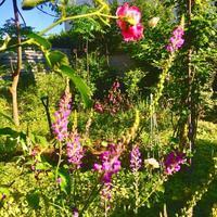 「いただきます」の意味 - 『with F』わたしたちの日常にたくさんのwithを...お花で癒やされ、発酵やさしいごはんで自分をつくり、旅で楽しむ☆