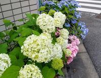 紫陽花と唄うたいのバラッド - 続☆今日が一番・・・♪