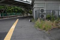 ネコ駅長 浅野駅 鶴見線探訪 -5- - 鴉の独りごと
