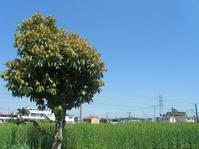 相模原市、矢部・淵野辺周辺の旅 ~その3~ - 神奈川徒歩々旅
