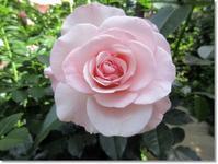 【横浜イングリッシュガーデン】⑤ようやく一回り - お散歩アルバム・・薔薇の季節