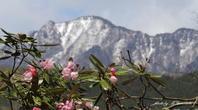 お山で出逢ったノスリ - 雅郎の花鳥風月