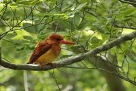 森の鳥 - Mag's DiaryⅢ