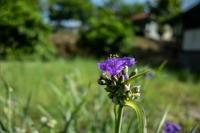 散歩道に咲く花 - 田舎もんの電脳撮影日記