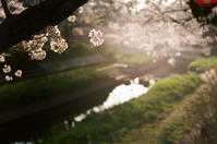 朝桜 - 節操のない写真館
