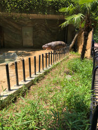 上野動物園にアイスを食べに行こう!! - カバのアイス屋さん