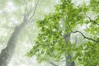 ブナの森へ(霧中) - 四季燦燦 癒し系~^^かも風景写真