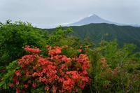 すずらんの山は躑躅の山でもあった~2018年5月 山梨百名山釈迦が岳 - 殿様な山歩き