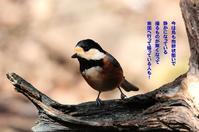 鳥の声はガビチョウの高鳴きしか聞こえて来ない~~ - Weblog : ちー3歩