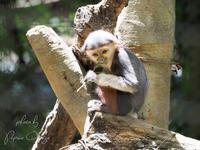 よこはま動物園ズーラシア 2018年5月20日 - お散歩ふぉと