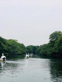 井の頭自然文化園 - 書家 髙野こうじのつれづれ日記