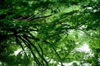 深緑 - 一歩々々 ~いっぽいっぽ~