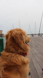 ヨットハーバーに行ってきました。 - ほんじつのおぐらけ