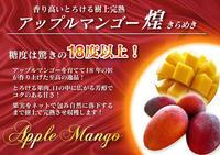 完熟アップルマンゴー着果の様子と果実の枝吊り - FLCパートナーズストア