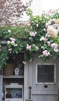 純さんの優しいお庭へ - Fiore Spazio 花便り