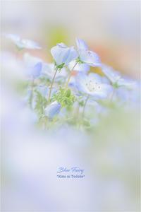 Blue Fairy VOL.03 END - 君に届け