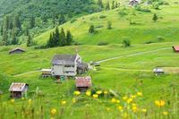 スイスミューレンのお花畑ハイキング - エーデルワイスPhoto