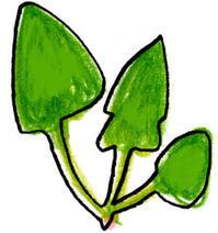 私のリフレッシュフード(岡) - 柚の森の仲間たち