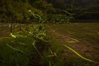 そろそろホタルの季節 - デジカメ写真集