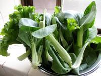 野菜が大好き! - Bのページ