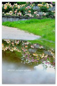 雨上がりの公園。 - Yuruyuru Photograph