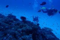 18.5.27 水納島へ、遠征。 - 沖縄本島 島んちゅガイドの『ダイビング日誌』