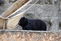 ソウくんのハンモック遊び - 今日ものんびり動物園