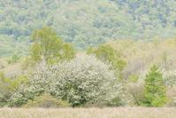 奥日光・戦場ヶ原のズミ - 光 塗人 の デジタル フォト グラフィック アート (DIGITAL PHOTOGRAPHIC ARTWORKS)