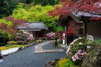 シャクナゲと春の山野草(古知谷阿弥陀寺) - 花景色-K.W.C. PhotoBlog
