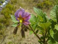 畑の花たち♪(南国畑) - 化学物質過敏症・風のたより2