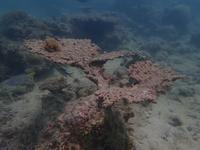 石垣島はサンゴの産卵ウイークです - ブルちゃんのログ