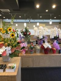 メダカフェ  レセプション2日目 - めだかやドットコム監修 めだか販売店